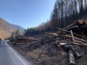Hazard Tree removal on Hwy 46