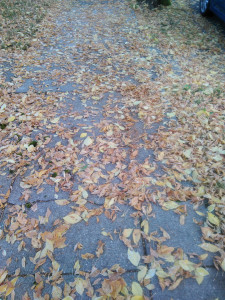 leaves of orange, yellow, and gold scattered across the cracked concrete of a sidewalk