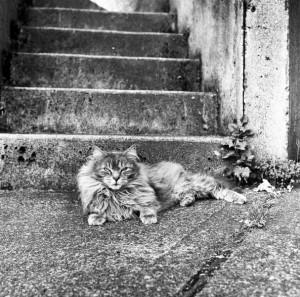 sarah_graves_pgp_grumpy_cat.jpg