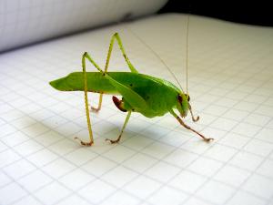 Insect Reference Photo Barro Colorado, Panama